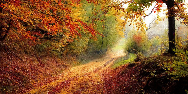 L'investissement forestier : fonctionnement et avantage fiscal